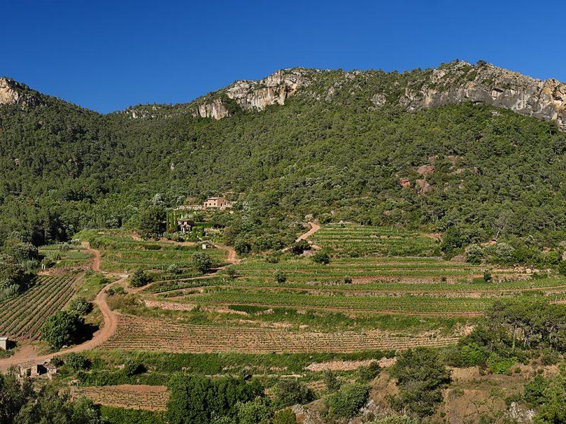 Finca Fontanals, al peu del morral de Falset,vinyes DO Montsant,Falset, Priorat, Tarragona