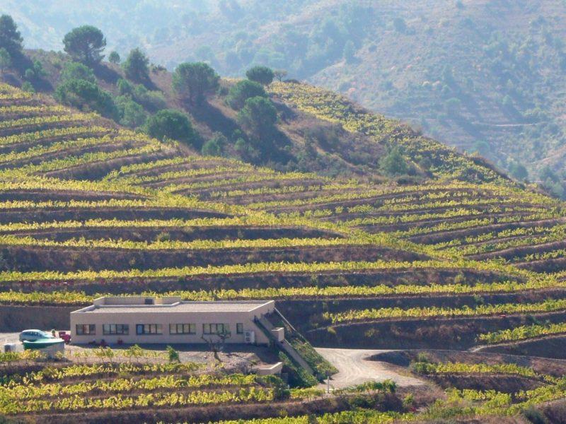 Winery 12 web